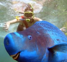 Photo Bomber No'6 THE PARROT FISH